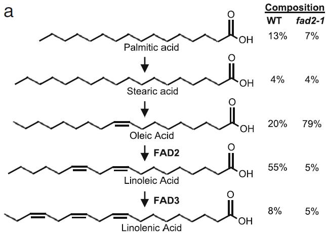 미국 칼릭스트는 지난 2019년 세계 최초로 게놈편집 고올레산 대두를 시장에 내놓았다. 연구자들은 지방산 생합성 유전자 가운데 올레산을 리놀레산으로 바꾸는 효소인 FAD2와 리놀레산을 리놀렌산으로 바꾸는 효소인 FAD3를 고장내 올레산 함량이 높은 기름을 얻는데 성공했다. 'BMC 식물생물학' 제공