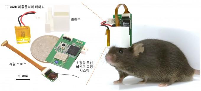 기초과학연구원(IBS)과 한국과학기술연구원(KIST) 공동연구팀이 생쥐 등 소형 동물에도 부착할 수 있는 ■ 초경량 무선 뇌신호 측정 시스템을 개발했다. IBS 제공